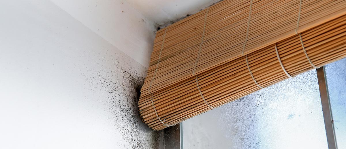 Aporta una protección duradera a tu hogar