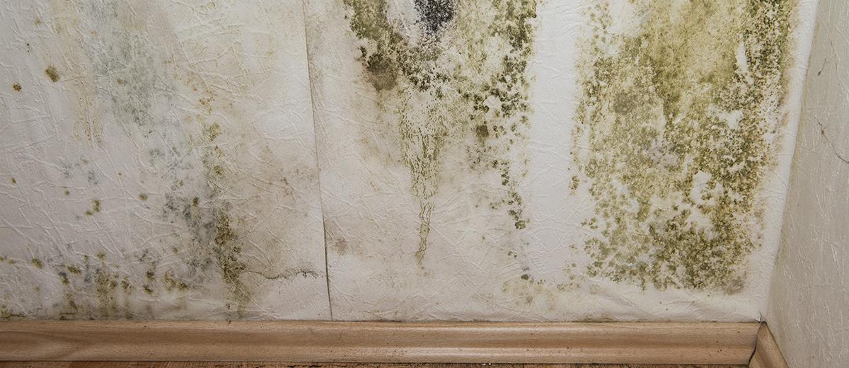 Elimina las manchas de algas y musgo
