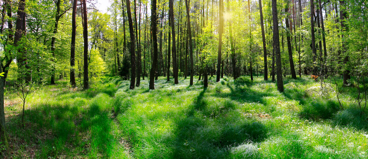 Nuestra madera no es tan natural, pero se pisa con naturalidad
