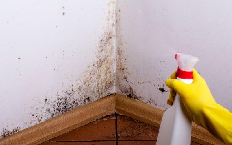 limpieza antimoho hogar